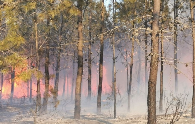 Incêndio consumiu área de pinhal e mato na Herdade de Pinheiro da Cruz