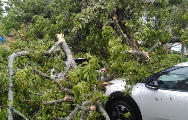 Queda de árvore danifica duas viaturas em Santiago do Cacém