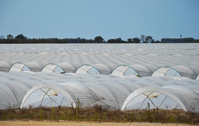 Movimento quer Avaliação de Impacto Ambiental na agricultura alentejana