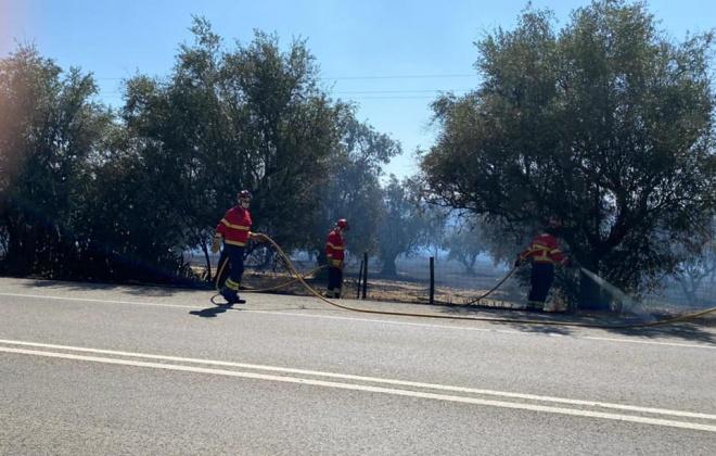 Incêndio consome área de mato na zona de Palma, em Alcácer do Sal